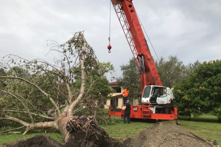 tree-removal-broward-3