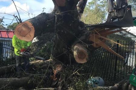 tree-removal-miami-1