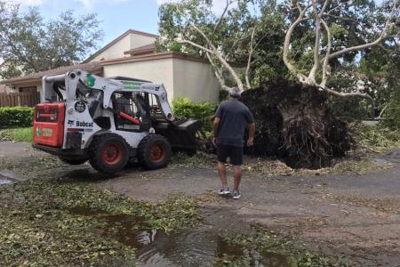 tree-removal-miami-2