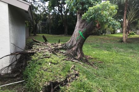 tree-removal-miami-6