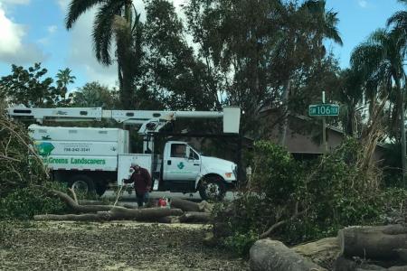 tree-removal-miami-7