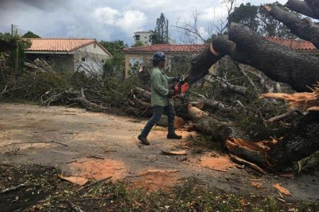 tree-removal-miami-8