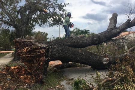 tree-removal-miami-9