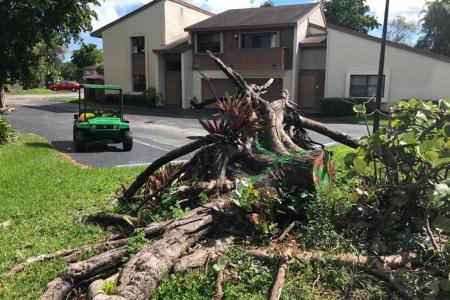 tree-removal-near-me-miami