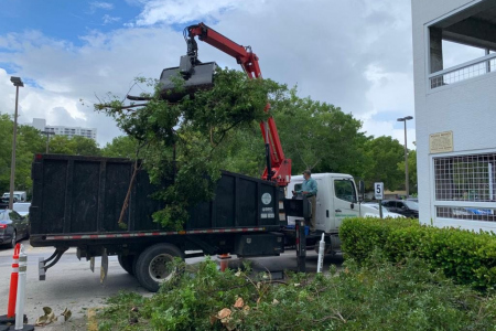 tree-removal-service-broward