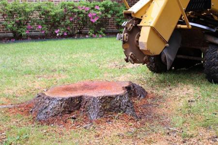tree-stump-removal-miami-2