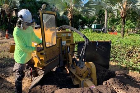 tree-stump-removal-miami