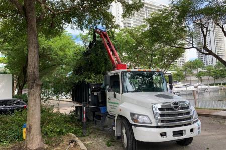 tree-trimming-miami-3