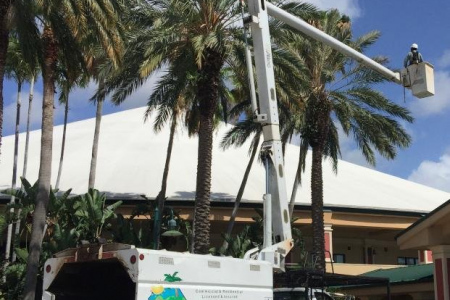 tree-trimming-west-palm-beach